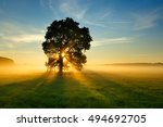 Oak Tree In Meadow At Sunrise ...