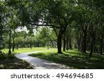rows of tree in a park | Shutterstock . vector #494694685