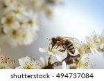 Close Up Of Honey Bee On Apple...