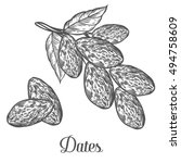 dates. hand drawn vector... | Shutterstock .eps vector #494758609