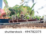 evergreen | Shutterstock . vector #494782375