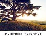 old lebanon cedar | Shutterstock . vector #494870485