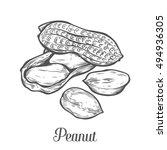 Peanut Nut Seed Vector....