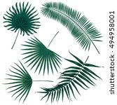 vector tropical palm leaves ... | Shutterstock .eps vector #494958001