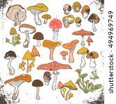 mushrooms big set colorful... | Shutterstock .eps vector #494969749