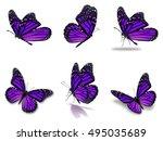 beautiful six purple monarch... | Shutterstock . vector #495035689
