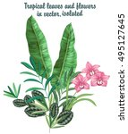 isolated vector set of tropical ... | Shutterstock .eps vector #495127645