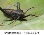 assassin bug | Shutterstock . vector #495183175