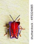 Small photo of Stink Bugs,Tessaratoma papillosa , Homoeocerus sp,Hemiptera (Coreidae)