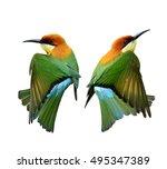 chestnut headed bee eater ...   Shutterstock . vector #495347389
