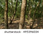 tropical grove | Shutterstock . vector #495396034