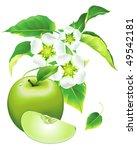 apple flowering | Shutterstock .eps vector #49542181