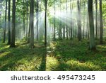 beautiful morning in the forest   Shutterstock . vector #495473245