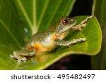 beautiful frog  frog   tree...