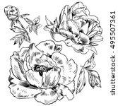 hand drawing peonies. vector...   Shutterstock .eps vector #495507361