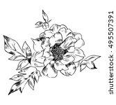hand drawing peonies. vector... | Shutterstock .eps vector #495507391