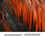 Background Of Chicken Feathers