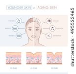 young healthy skin and older... | Shutterstock .eps vector #495532465