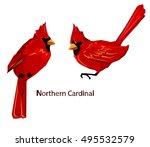Northern Cardinal  Red Cardina...