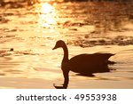 Silhouette Of A Canadian Goose...