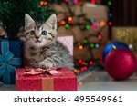 close up of cute brown tabby... | Shutterstock . vector #495549961