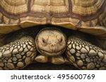 Elongated Tortoise. Giant...