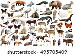 set of various asian isolated... | Shutterstock . vector #495705409
