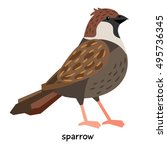sparrow vector illustration | Shutterstock .eps vector #495736345