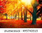 autumn. fall scene. beautiful... | Shutterstock . vector #495743515