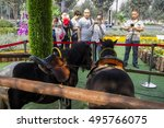 Small photo of On October 2, 2016, in xi 'an shopping square of recreational area, two horses short Ma Meng state is very, attract people to watch and take photos. Pony refers to adult body under 106 cm high horse.
