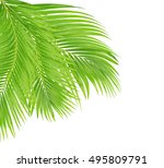 green leaves of palm tree... | Shutterstock . vector #495809791