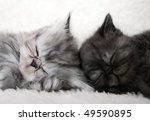 Stock photo two sleeping kittens 49590895
