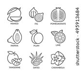 basic fruits thin line icons... | Shutterstock .eps vector #495913684