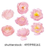 set of brier blooms isolated on ... | Shutterstock . vector #495998161