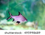 purple fish in the aquarium and ... | Shutterstock . vector #495998689