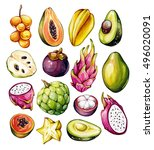 tropical fruits set. exotic... | Shutterstock . vector #496020091