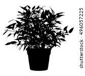 tree  flower benjamin   ficus... | Shutterstock .eps vector #496057225