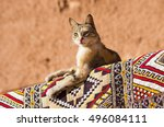 Small photo of Cat lying on the carpet in one of african country