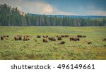 Bisons  Yellowstone National...