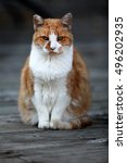 orange cat sitting on an old... | Shutterstock . vector #496202935