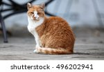 orange cat sitting on an old... | Shutterstock . vector #496202941