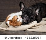 Stock photo funny cat and dog lying on the floor playing hugging each other 496225084
