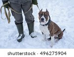 pitbull dog sitting near the... | Shutterstock . vector #496275904