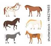 cute horses in various poses... | Shutterstock .eps vector #496279855