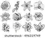 rose  bird cherry tree  lilac ... | Shutterstock . vector #496319749