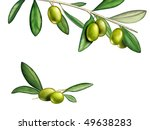several olives on a branch.... | Shutterstock . vector #49638283