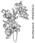 black and white sketch of... | Shutterstock . vector #496403611