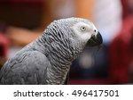 portrait of an congo african... | Shutterstock . vector #496417501