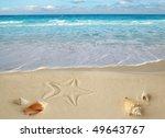 Sea Shells Starfish On Tropical ...