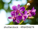 purple orchid | Shutterstock . vector #496454674